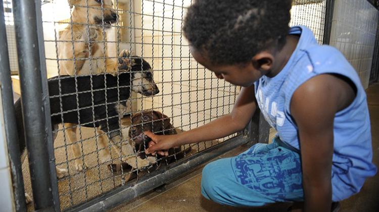 Entra em vigor lei que proíbe sacrifício de animais pelas zoonozes